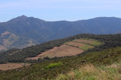 Parcelle de Llagastère 350 m d'altitude à 3000 mètre de la mer!